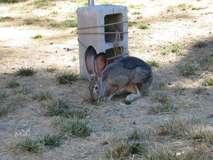 Grampa Hare