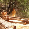 Chainsaw milling the madrone tree