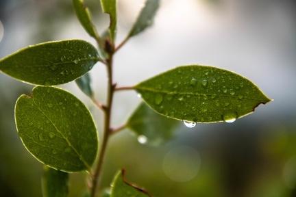 The Rains Return