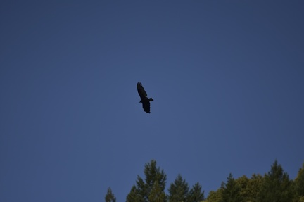 06 Eagle