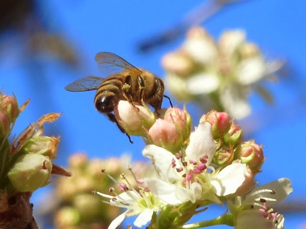 077) Bee