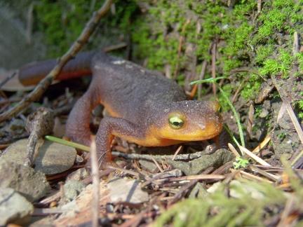 079) Frog