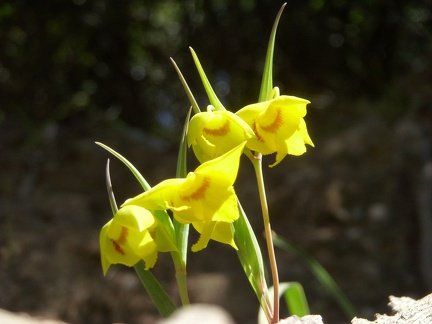 081) Yellow flowers
