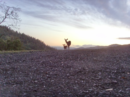 082) Sunset & Deer