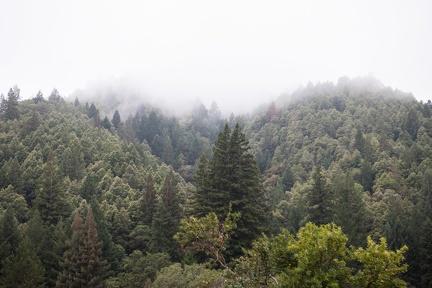 Mist above the Abhayagiri mountain