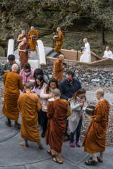 Lay supporters distributing rice to monks during the ceremonial alms round